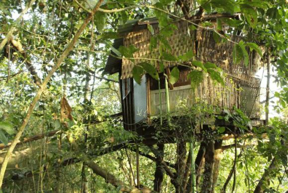 Casa na árvore em Paraty