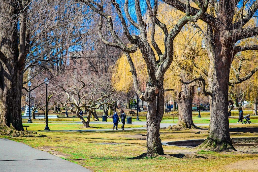 Parque em Boston. Árvores e pessoas caminhando